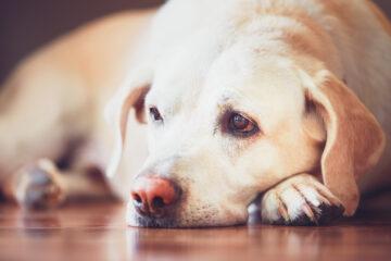 Como o lockdown afeta a vida dos animais