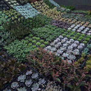 Shopping de Curitiba promove feira com milhares de suculentas a partir de R$2,50