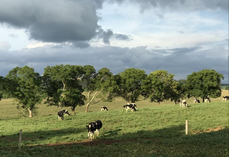 Colônia alemã de Witmarsum começa a produzir o primeiro leite tipo A homologado pelo SIF no Paraná