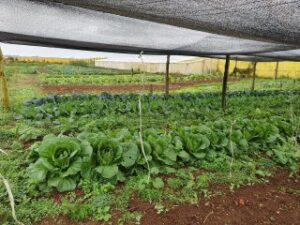 Do campo à mesa: Agricultores se reinventam e encontram novas formas de chegar ao consumidor durante pandemia