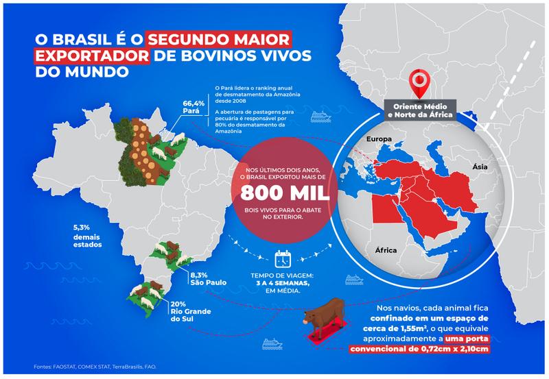 Mais de 800 mil animais vivos sofrem com a exportação no Brasil