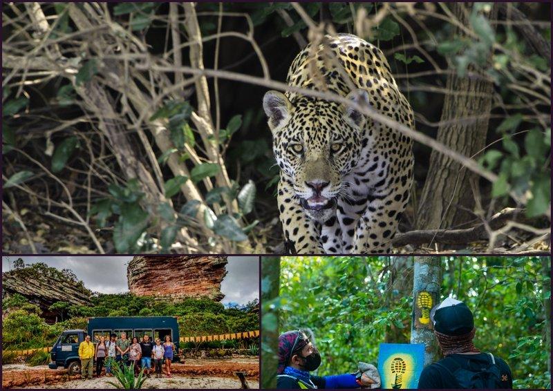 Um Dia no Parque 2021: maior evento de mobilização pelas Unidades de Conservação no Brasil será on-line