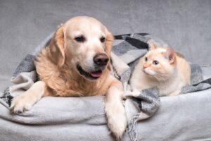 Temperaturas baixas exigem cuidados com a saúde e o bem-estar dos animais
