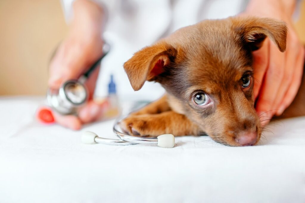 Suplementação pode ser grande aliada na manutenção da saúde dos pets durante inverno